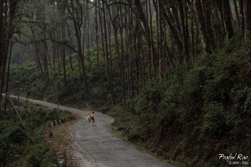 The road to Pedong