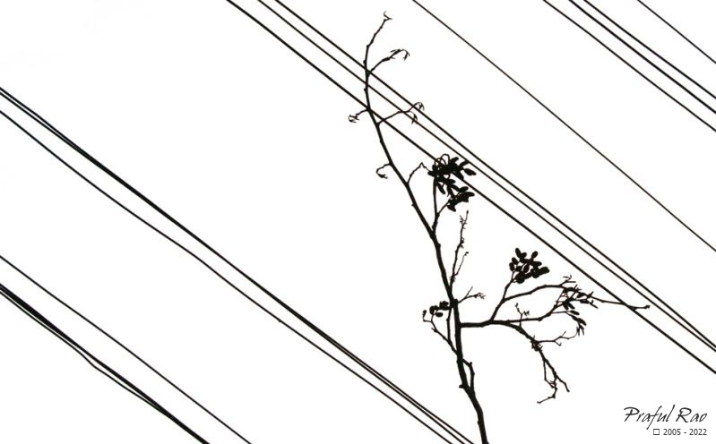 Twig and wires