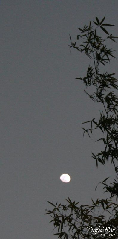 Bamboo and the moon