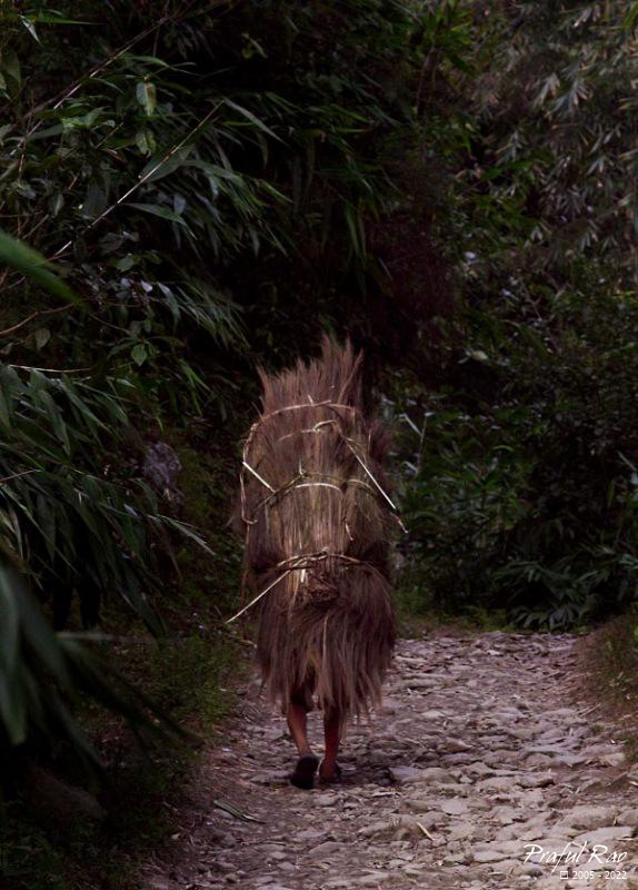 Villager carrying broom sticks